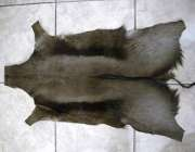 Black Springbok hide - skin